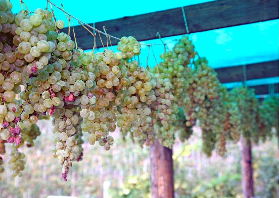 Doreca | vino passito